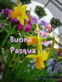 Buona #Pasqua - #narcisi