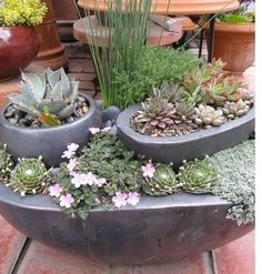 Succulent container garden (thanks @Shenikacno946 )