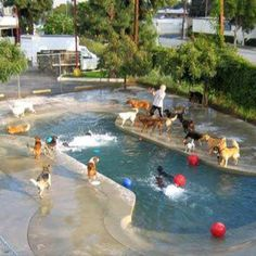 Doggy Daycare and Cage-Free Boarding Awesome bone shaped beach entry pool at a doggie daycare. Diy Pour Chien, Beach Entry Pool, Dog Playground, Pet Hotel, Pet Resort, Pet Boarding, Dog Daycare, Dog Park, Dog Houses