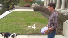 Impossible Dog Trick! How to Teach Your Dog Math