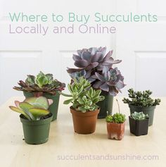 Where to Buy Succulents Locally and Online - Succulents and Sunshine