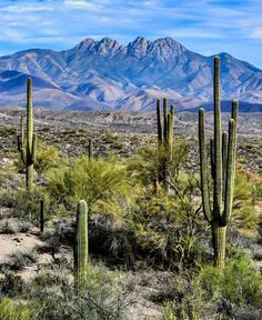 Absolutely stunning with all those cactus out there all by their selves All Nature, Science And Nature, Amazing Nature, Beautiful World, Beautiful Places, Arizona Winter, Southwest Usa, Desert Dream, Into The West