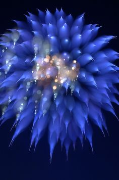 """""""Focus Blur Fireworks"""" by Chase Schiefer"""