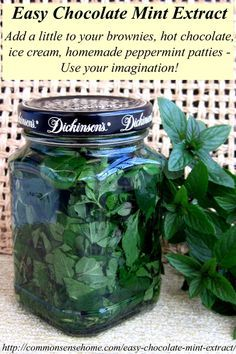 Homemade Mint Extract - This easy chocolate mint recipe is a great way to use your home grown mint for cooking, baking, hot chocolate, gift giving and more.(Chocolate Mint Uses) Mint Recipes, Herb Recipes, Canning Recipes, Thm Recipes, Menta Chocolate, Hot Chocolate, Homemade Chocolate, Chocolate Mint Plant, Chocolate Mints