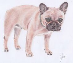 French bulldog in disstress; drawing with pastel pencils on white paper (size Pastel Pencils, Pastel Drawing, White Paper, Paper Size, Animal Drawings, A4, French Bulldog, Dogs, Animals