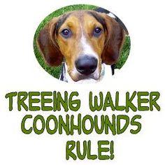 treeing walking coonhound pictures | treeing_walker_coonhounds_rule_calendar_print.jpg?height=250&width=250 ...