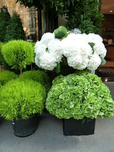 Decorate your home's outside front entrance with flowers and plants. Get ideas with these front door flower and plant ideas. #frontdoorflower #flower #potflower