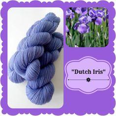 Dutch Iris - Dutch Flowers | Red Riding Hood Yarns Dutch Iris, On October 3rd, Red Riding Hood, Yarns, Pink Purple, Holland, Flowers, The Nederlands, Little Red