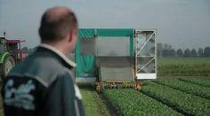 Aan de slag! Bekijk de video – Wilde spinazie – Allerhande
