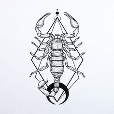 Картинки по запросу scorpion drawing
