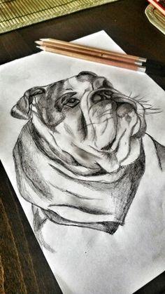 Bulldog art