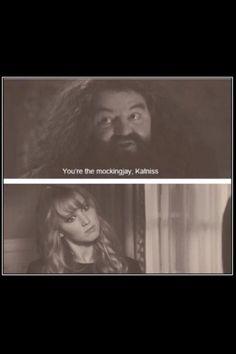 Lol haha funny humor / Harry Potter / Hunger Games / Jennifer Lawrence / Katniss Everdeen / Mocking Jay