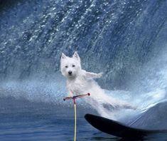 Surfista a la vista