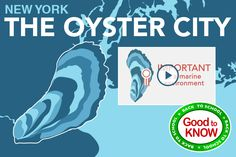New York the Oyster City - Did you know New York harbor once produced 1.5 million oysters EVERY DAY? Watch: Oyster City and check out this cool Infographic video. http://h2ocanada.com/webisodes/415-new-york-the-oyster-city