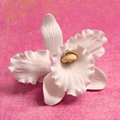 White Sugar Cattleya Orchids