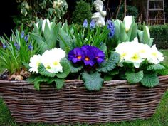Baskets and flowers