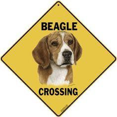 beagle crossing