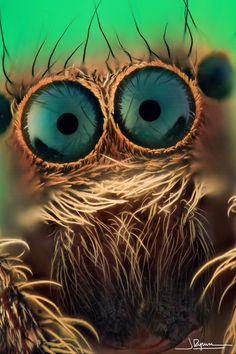 spider eyes! Jim Henson had to be inspired by this type of close up.
