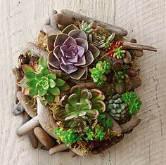 Table succulents - The chicest of living centerpieces, succulents breathe life into a room and are ideal for those who haven't quite mastered keeping plants alive. You can embrace a mossier centerpiece for an earthy relaxed feel or Hens and Chicks and Panda Plants for a clean, crisp look.