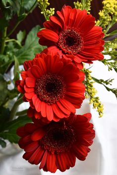not poppies, gerbera daisies (not sure on spelling) Flowers Nature, Exotic Flowers, Amazing Flowers, Beautiful Roses, Beautiful Gardens, Beautiful Flowers, Beautiful Person, Gerbera Flower, Gerbera Daisies