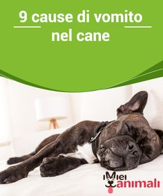 9 cause di vomito nel cane Il #vomito del cane può dipendere da diverse #cause. In generale, si tratta di un #malessere passeggero che non rappresenta un grave rischio. #Salute