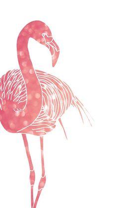 Papéis de parede de Flamingos para whatsapp