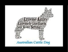 Hey, I found this really awesome Etsy listing at https://www.etsy.com/listing/224383645/australian-cattle-dog-australian-cattle