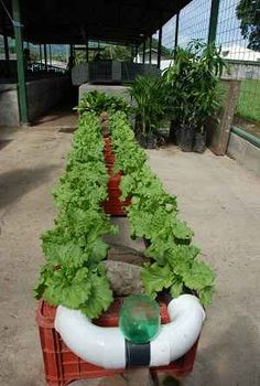 Hydroponic Gardening For New Beginners The System Structure Must Be Able To Support Root Without Soil