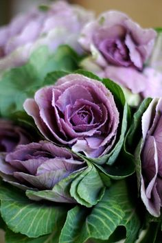 Did you know that you can make flowers completely out of cabbage?! Now if only money grew on trees....