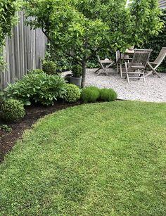 Back Gardens, Outdoor Gardens, Modern Garden Design, Backyard Patio Designs, Outside Living, Garden Spaces, Front Yard Landscaping, Garden Planning, Garden Projects