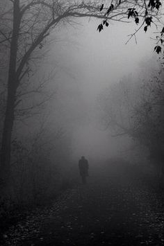 two of my FAVORITE things in one beautiful photo.trees and fog. Can a walk out there ever be as magical as fog in the trees? Dark Photography, Black And White Photography, Street Photography, Dark Forest, Dark Places, Belle Photo, Dark Art, Mists, Scenery