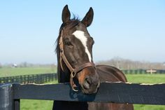 Zenyatta at Lane's End Farm. Photo by Kyle Acebo.