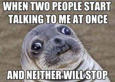 LOL #introvert ahh such a cute seal face