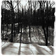 #Trees can be beautiful, even without their leaves. | Sand Run Metro Park, Akron, Ohio | via @Metro Parks | #WinterTrees #TreePhotos #Winter