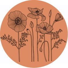 Pin by emily wyckstandt on printables poppies tattoo, flower line drawings, Flower Line Drawings, Art Drawings, Drawing Flowers, Zantangle Art, Op Art, Poppies Tattoo, Plant Drawing, Drawing Step, Drawing Drawing