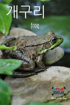 "Here's today's Korean word of the day!  The word 개구리 means ""frog.""  If you can't read this word yet, download our free EPIC Korean reading guide by clicking the link in our bio and we'll teach you in 60 minutes.  Repin if this was helpful!"