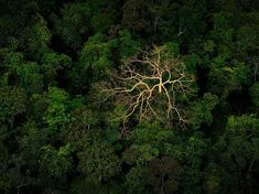 Honduras Rainforest | Jungle Picture – Rain Forest Photo – National Geographic Photo of ...