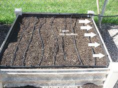 garden irrigation -   @Corner Bakery Cafe