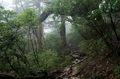 Yakushima Forest, Japan. With trees dating as far back as Stonehenge and the Egyptian pyramids, these majestic old forests are living shrines to the ancient past.