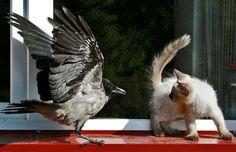 фото кошек и котят смешные — Рамблер-Поиск по картинкам