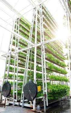 skygreens-vertical-farm-2  FAZENDAS VERTICAIS DA INDONÉSIA