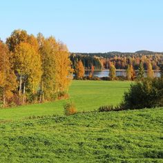 The last day of ❤️ Yesterday's view from our office window was so beautiful. Finland, Countryside, September, Window, Autumn, Landscape, Colors, Day, Nature
