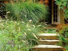 Oversized natural stone steps leading to the terrace are softened with clumps of bold ornamental grasses.