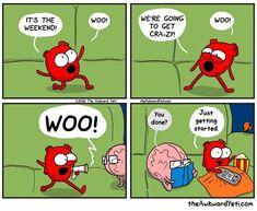 Akward Yeti, The Awkward Yeti, Funny Cartoons, Funny Comics, Funny Memes, Jokes, Heart And Brain Comic, Funny Cute, Hilarious