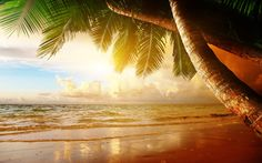beach coast tropical ocean sunset palm paradise summer sea wallpaper background