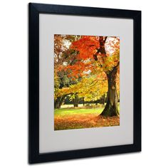 'Dance of Colors' by Philippe Sainte-Laudy Matted Framed Photographic Print