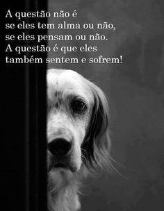 Os animais sentem dor, frio, tristeza, alegria, fome, sede... e precisam de cuidados e muito amor tal e qual os humanos
