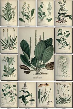 LEAVES GRASS-6 Collection of 176 vintage by ArtVintage1800s