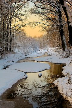 seasonalwonderment:  beauty-rendezvous:  Winter Wonderland by lichtschrijver  ♥