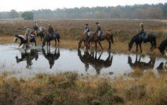 Paardrijden op de Veluwe.